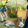 Animal Planet - Veterinario Extremo