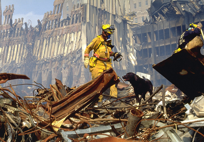 Animal Planet - Heroes Caninos del 9-11 1