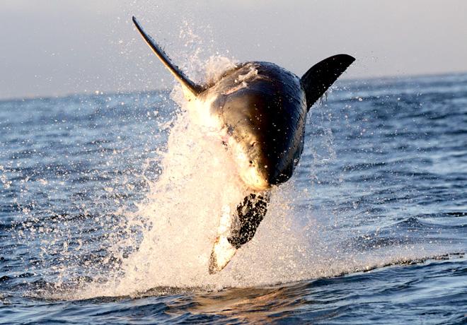 Animal Planet - Semana del Tiburon