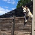 Animal Planet - Mascotas Revoltosas 1