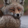 Animal Planet - Espania Salvaje