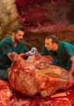Nat Geo - Autopsia de un Tiranosaurio 2