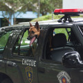 Animal Planet - Heroes Caninos 2