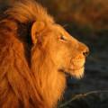 Animal Planet - Leyenda de un Rey