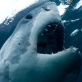 Discovery Channel - Shark Week - Semana de los Tiburones