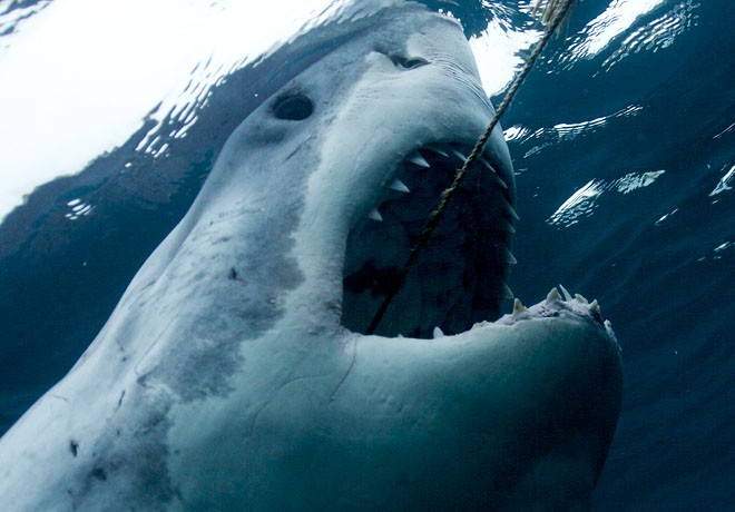Discovery Channel - Shark Week - Semana de los Tiburones