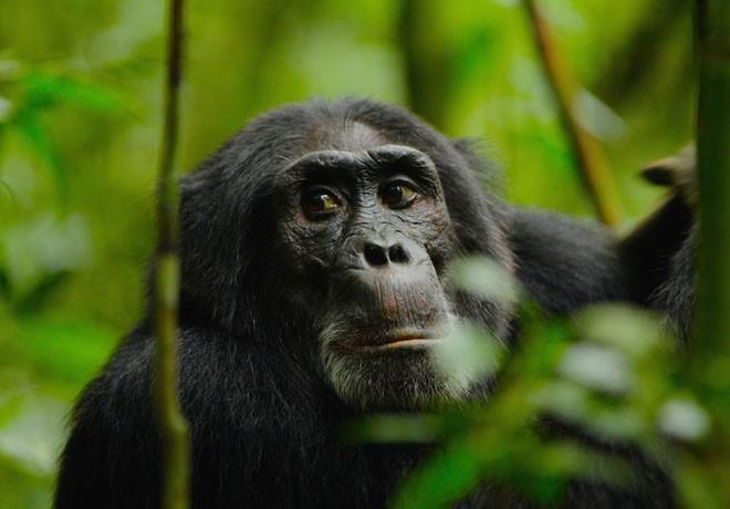 Animal Planet - La Rebelion de los Simios
