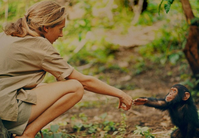 National Geographic - Jane - Jane Goodall 2